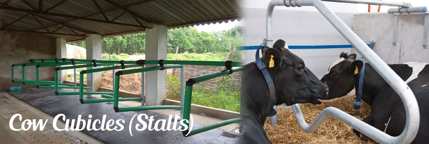 Cow Cubicles (Stalls)