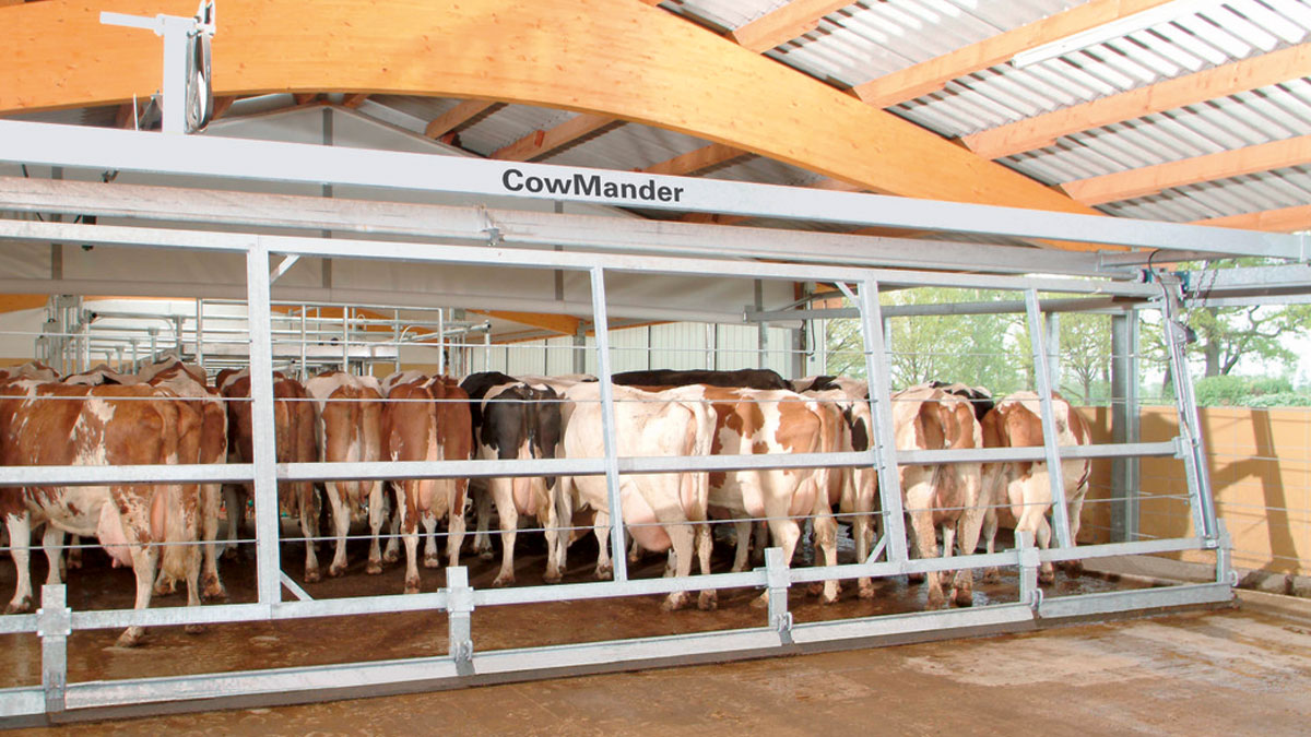 Dairy Crowd Gates in Guyana