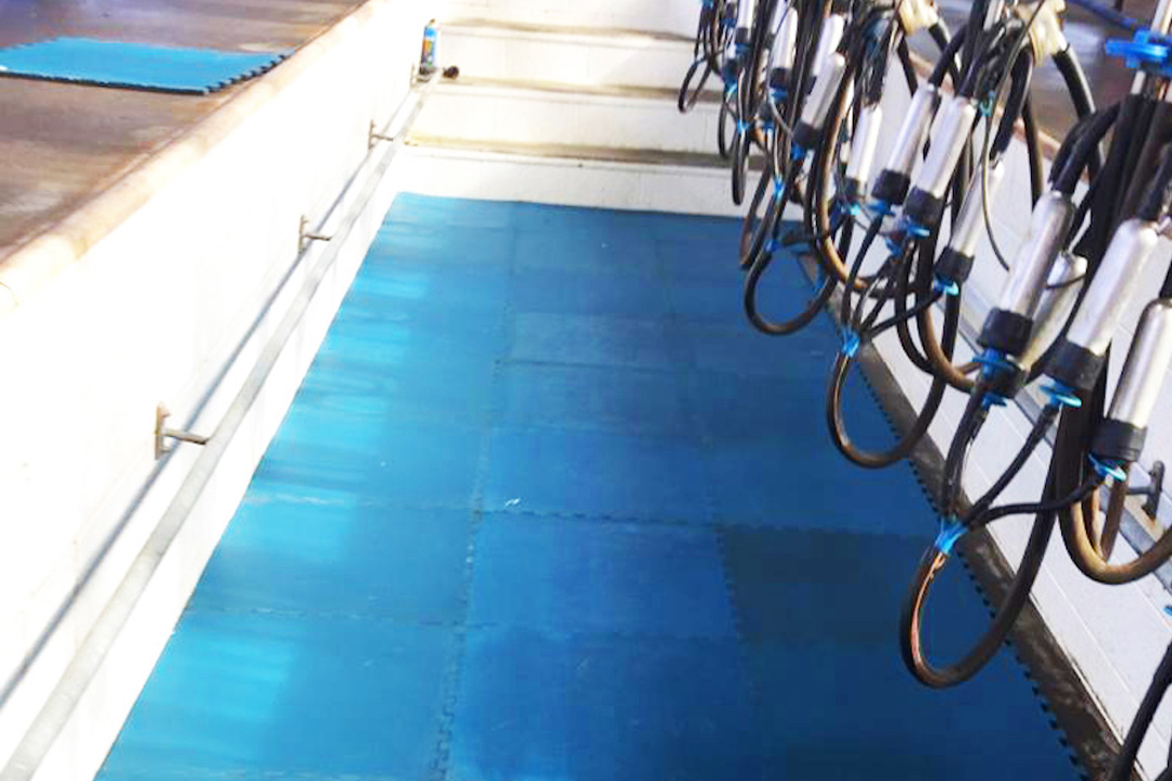Milking Parlour Mats in Chicago